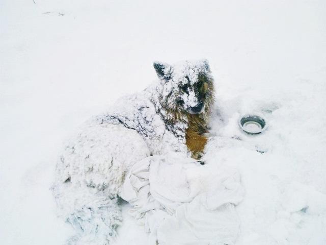 """Potrącony pies na """"siódemce"""". W Szydłowcu to standard?"""