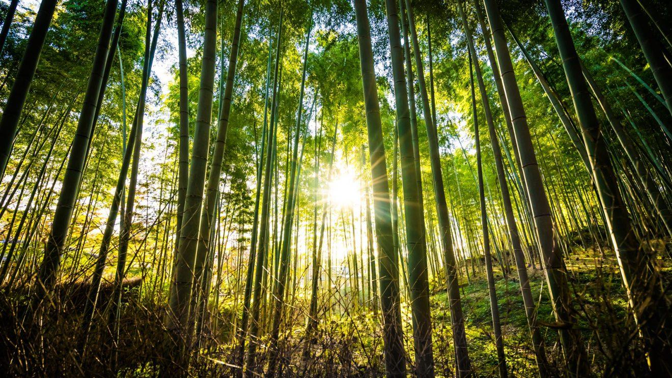 Zachowaj ostrożność w lesie