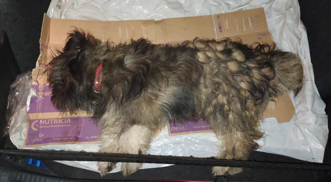 Potrącony pies i znieczulica służb