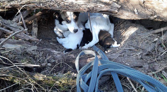 Niesamowita psia historia pod Szydłowcem