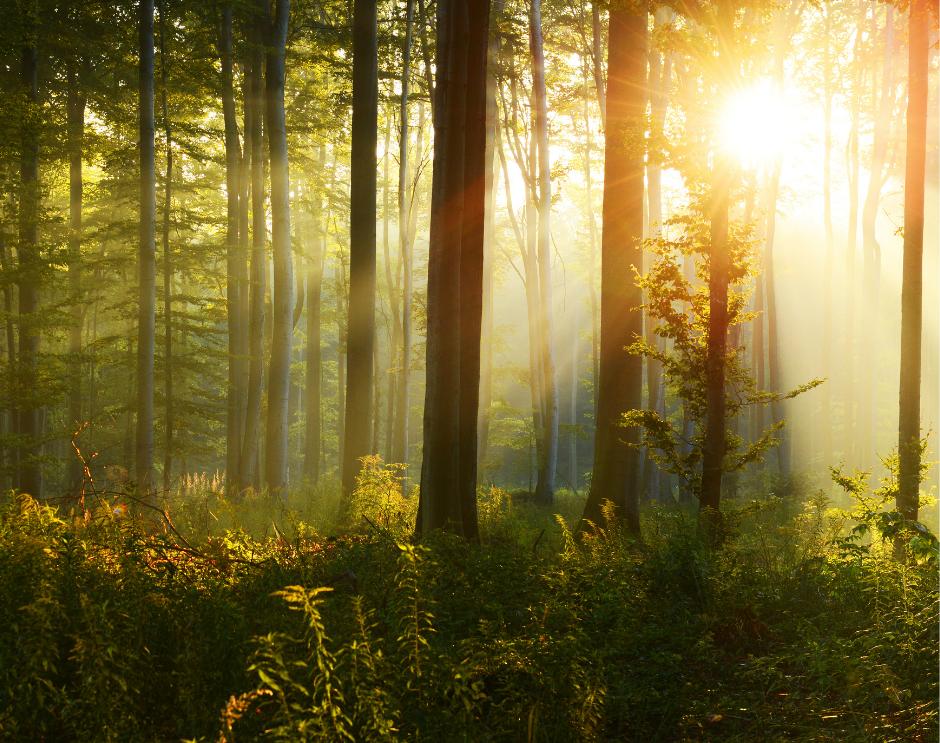 Wędrówka po szydłowieckich lasach