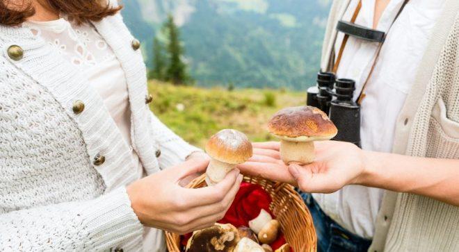 Jak bezpiecznie zbierać grzyby w lesie?